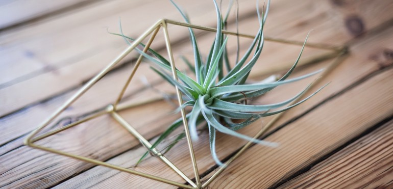 Accents with Air Plants