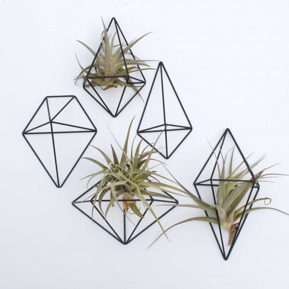 5 himmilis with airplants