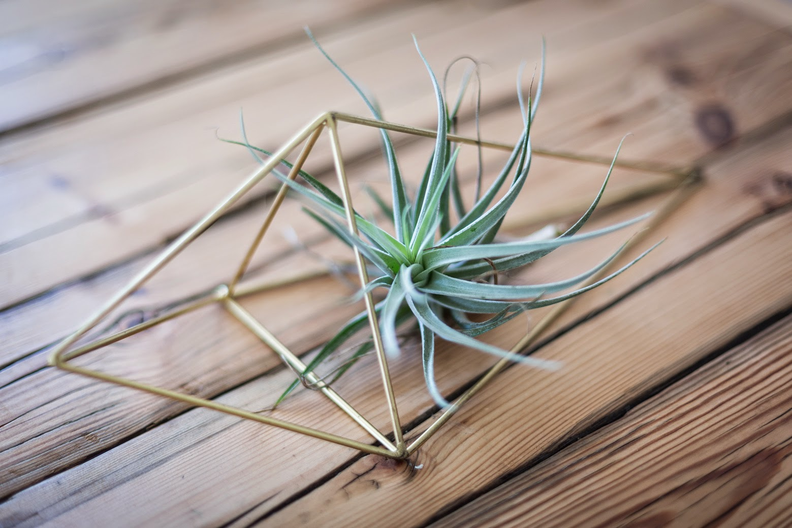 Himmeli 1 with Air Plant