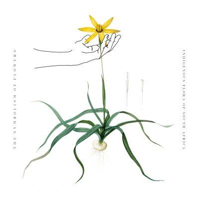 HYPOXIS FLOWER